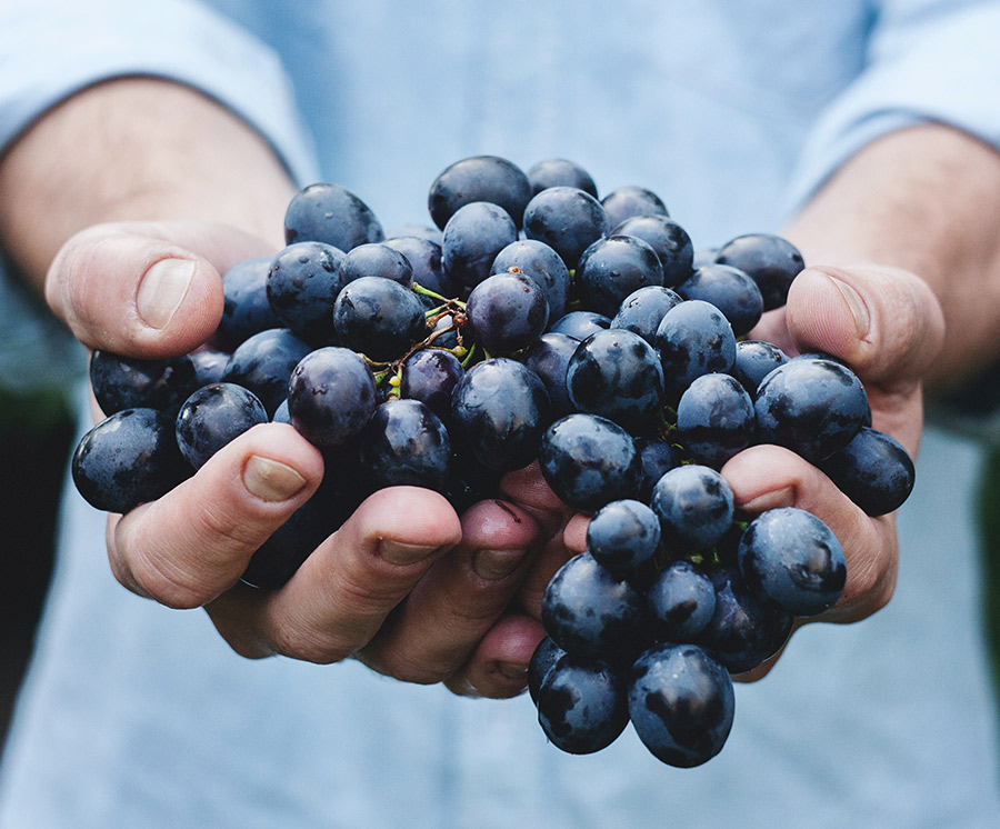 Trauben aus Italien Weine - Doppio Gusto Restaurant